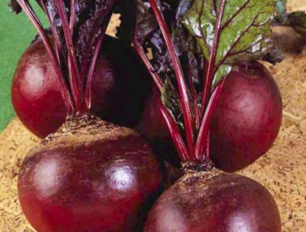 40 лучших семян и сортов свеклы для открытого грунта для сибири урала и подмосковья для зимнего хранения