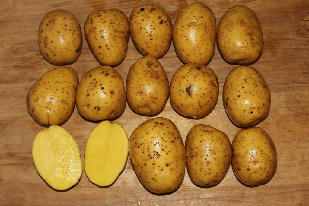 стильный креативный гала картофель характеристика фото ковалевский один известнейших