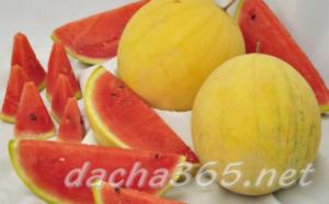 Какие сорта арбузов выращивают в саратовской области?