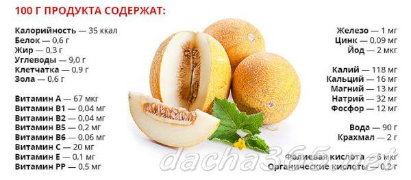 дыня1