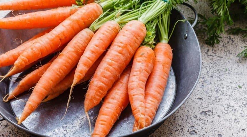 Лучшие сорта моркови голландские: посадка и уход