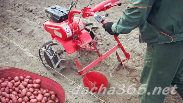 Технология посадки картофеля мотоблоком