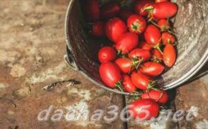 томатгрунт1