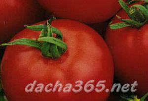 томатгрунт13