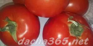томатгрунт5