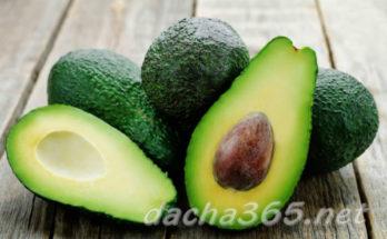 авокадой