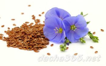 семенальна