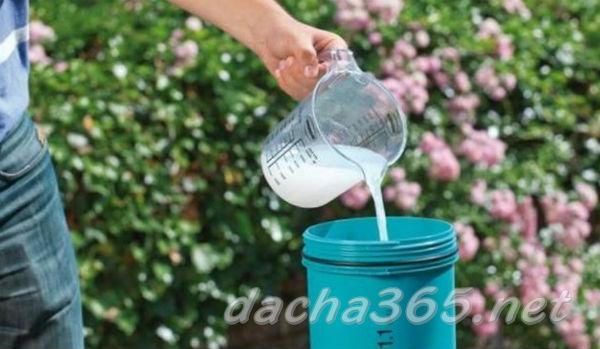 Как приготовить фосфорно калийное удобрение для опрыскивания