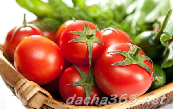 полезны ли помидоры для похудения