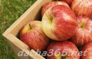 яблокисохранить1