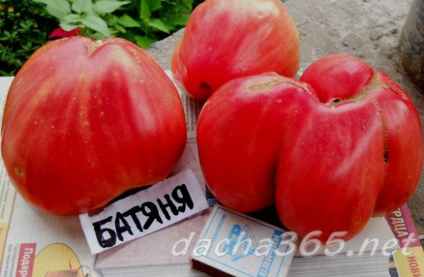 Томат Батяня описание и характеристики сорта