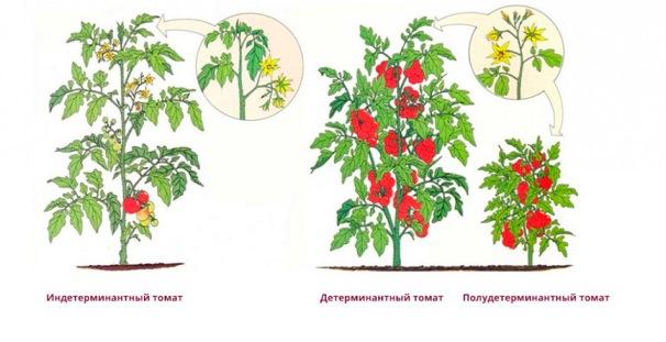tomat-det-indet-4