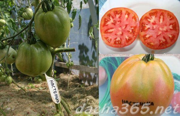 Прекрасный томат Настенька преимущества и недостатки
