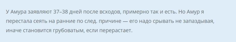 ogurets-amur-otzyv8