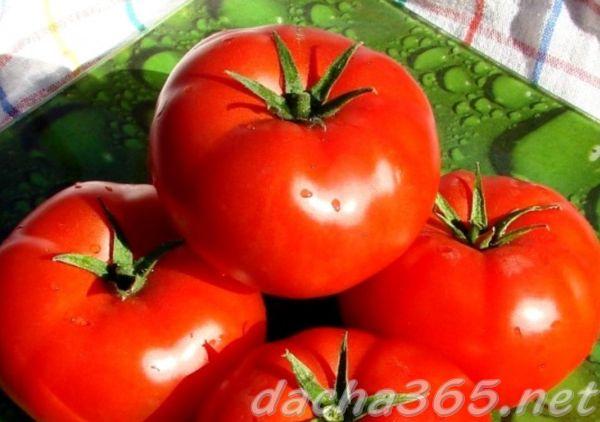 Томат Президент F1: характеристика и описание сорта семян, видео и фото куста, отзывы об урожайности помидоров