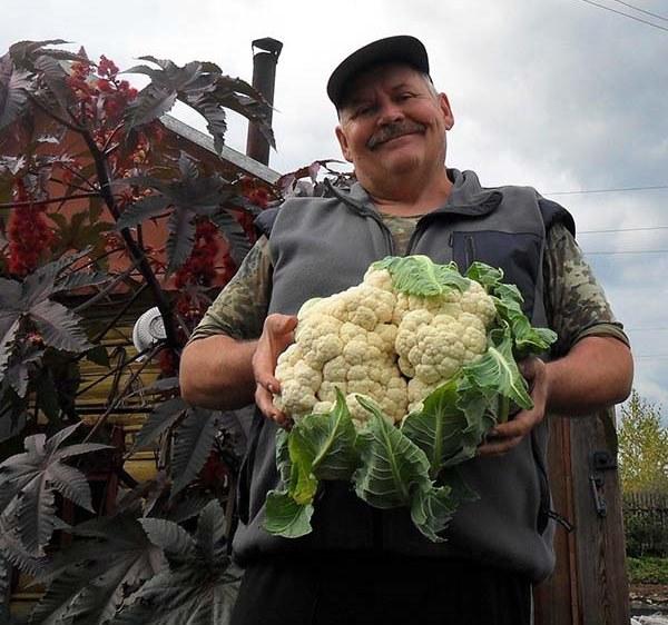 Самые лучшие сорта цветной капусты