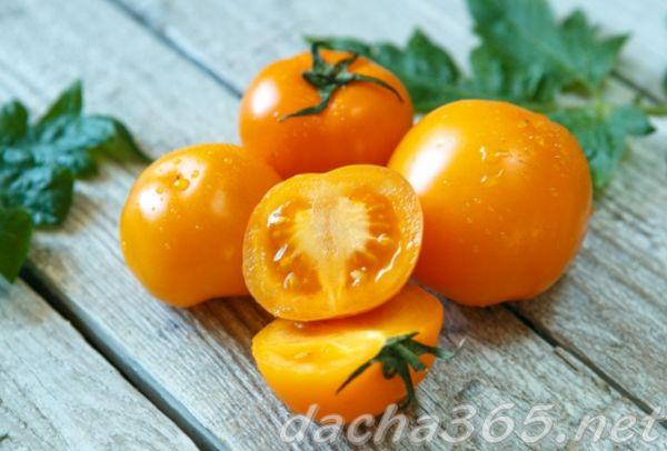 Лучшие сорта желтоплодных томатов: посадка и уход